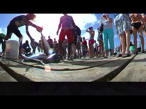 Cleaning Tuna on Santa Maria Pier, Sal, Cape Verde