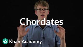 Chordates | Crash Course biology | Khan Academy