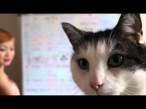 CAT VIDEO BOMBING LECTURE VIDEO