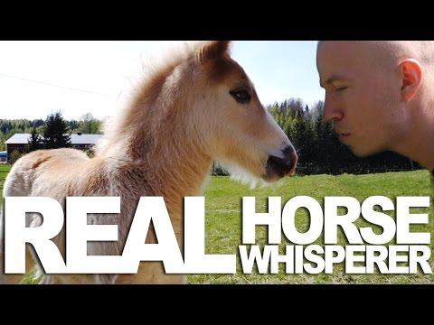 Most Awesome Horse Whisperer Like A BOSS clip