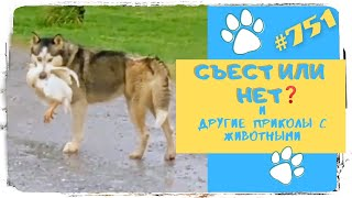 СЪЕСТ ИЛИ НЕТ и другие Приколы с Животными Funny Animals 751