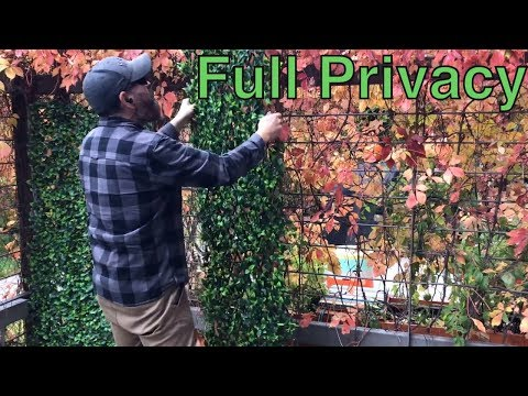 Get year round privacy  with Expandable Faux Ivy Privacy  Fence