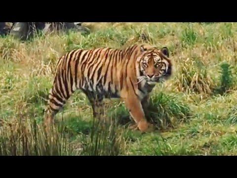 Orana Wildlife Park, New Zealand.