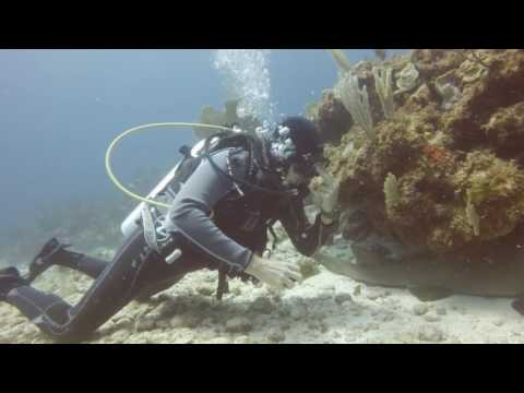 Diving With Scuba Cancun
