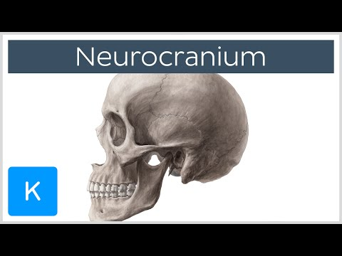 Neurocranium - Definition and Location - Human Anatomy | Kenhub