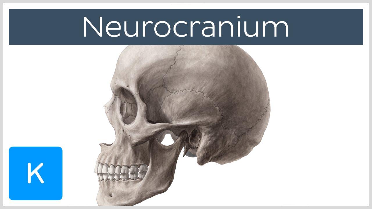 Neurocranium - Definition & Location - Human Anatomy | Kenhub - YouTube