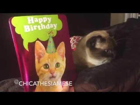 Kittens Singing Happy Birthday (card)