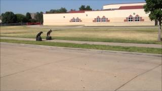 Tulsa Dog Trainers - One Trainer - Two Puppys