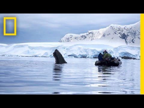 Trailer | Continent 7: Antarctica