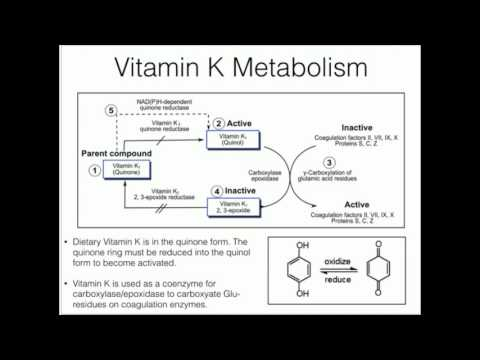 Vitamin K: Metabolism and Function
