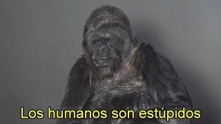 por-que-un-ave-habla-y-un-chimpance-no