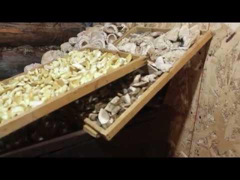 Гриб дубовик: фото и описание видов съедобных грибов