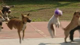 Skipping dogs break world's greatest record
