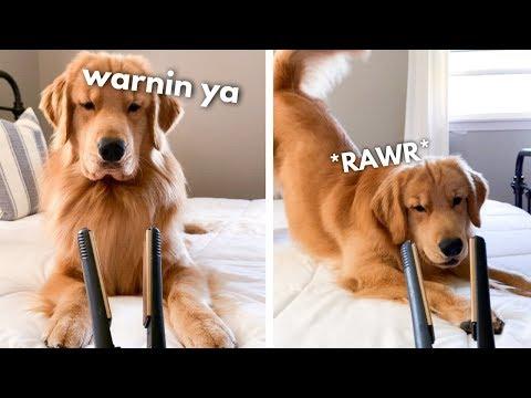 My Dog Reacts to Hair Straightener