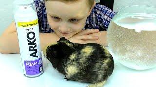 - Эксперимент Побрили Жорика Морскую свинку ОПЫТЫ Развлечения для детей