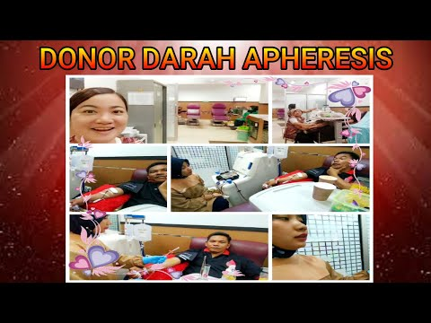 donor-darah-apheresis