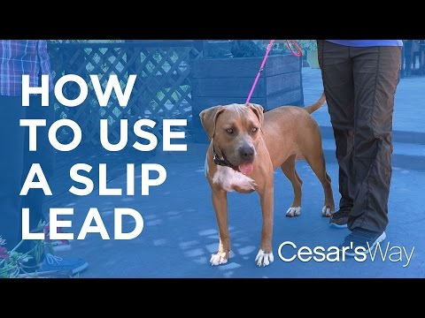 How to Use a Training Lead