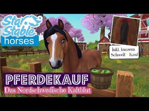 Star Stable Horses APP [PFERDEKAUF]: ASHBLOOD das Nordschwedische Kaltblut zieht ein [DEUTSCH]