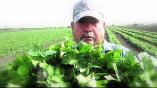 Reportajes de Alvarado - Agricultura de Cadereyta Jiménez, NL