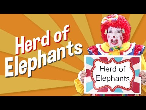 Herd of Elephants with Florabelle of Clowns on Call