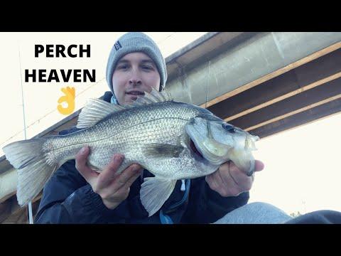 A Bit Of Fun On The Estuary Perch Under Fitzgerald Bridge ~ Williams River