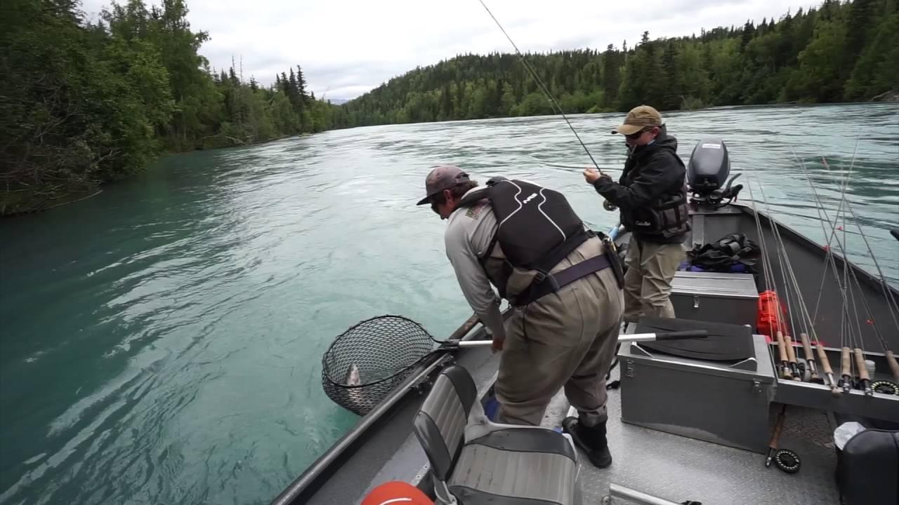 Upper kenai river july 2016 youtube for Kenai river fish counts