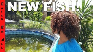 new fish in the pond help us name them
