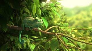 Tomer Eshed - OUR WONDERFUL NATURE - THE COMMON CHAMELEON teaser