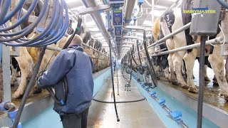 Milking 1,200 cows 3 times a day! [Swing Over Rapid Exit]
