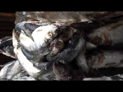 Southeast Alaska Winter Crab Season 2016