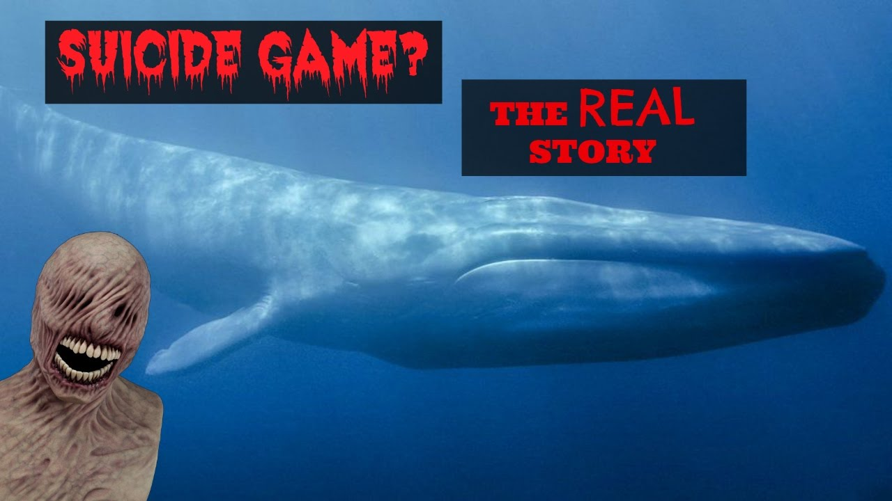 blue whale game facts