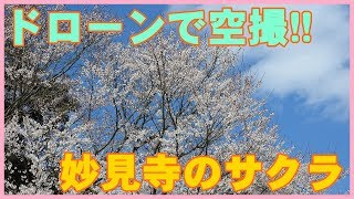 高崎市の妙見寺の桜をドローンで空撮!JJRC H8C
