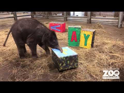 2019-asian-elephant-baby-naming-reveal
