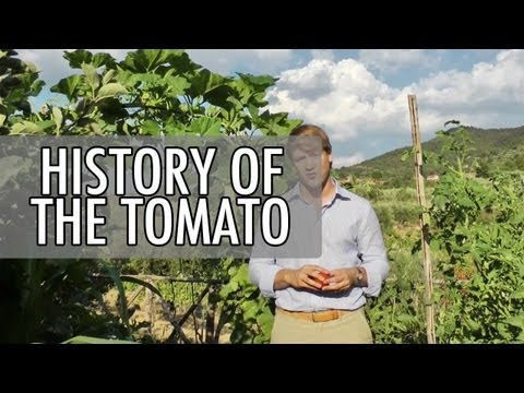 The History of the Tomato in 2 Minutes   Walks of Italy