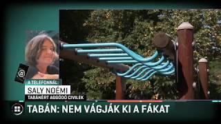 Tabán: Nem vágják ki a fákat 19-09-04