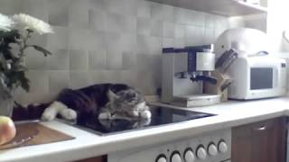 Никифор кот спит на плите  TALKING CAT who snaps on the stove   YouTube 360p(, 2014-02-22T06:39:37.000Z)