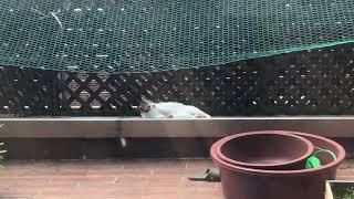 베란다에 널린 고양이들