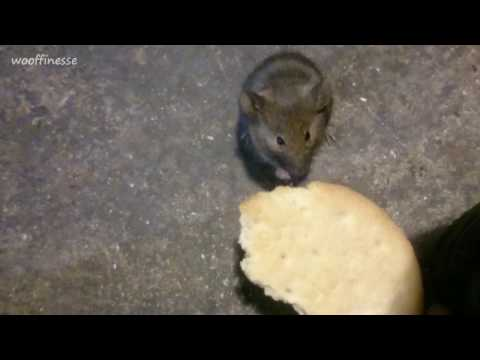 #13  How To Tame A Wild Mouse