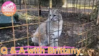 Gambar cover Morning Walk About at Big Cat Rescue 01 08 2020