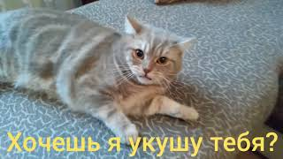 Кот говорит отойди ( 3 серия )