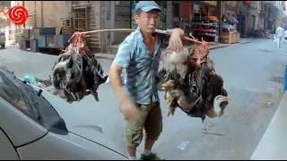 Кто в Китае был, тот в цирке не смеётся #6 (утки пучками, жабы на обед и т.д.) Alles Asia