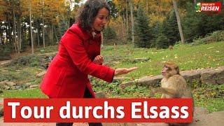 Das Elsass entdecken - eine Tour von Eguisheim über Colmar bis zur Hochkönigsburg, Spar mit! Reisen