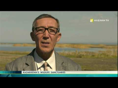 Kazakhstan's wildlife sanctuaries №10 (28.05.2017) - Kazakh TV