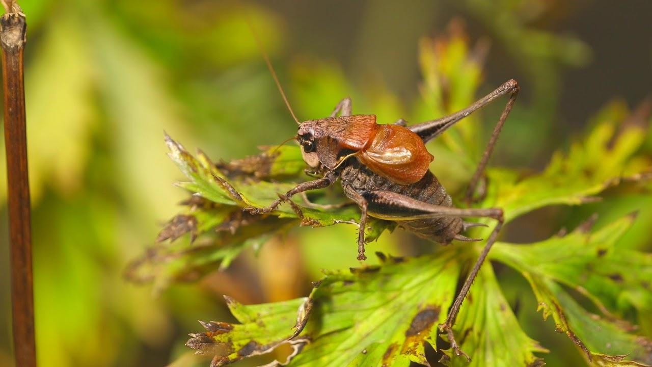 Recunoașterea insectelor dăunătoare și cum să depășească inteparea - Viață sănătoasă