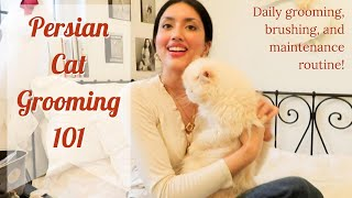 Persian Cat Grooming 101 | Daily Maintenance Routine