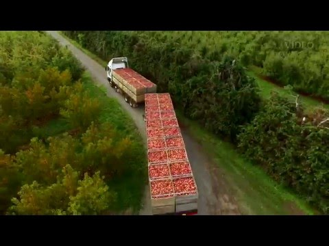 Apple harvest aerials above Hawkes Bay Orchards