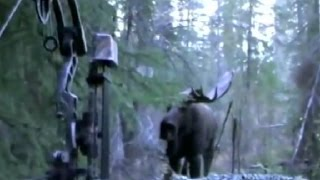 VIEW ALL! moose hunting.СМОТРЕТЬ ВСЕМ! Охота на лося с луком