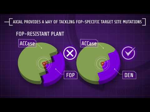 Explaining Herbicide Resistance: Herbicide modes of action