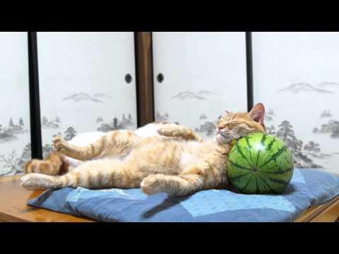 Cuteness Break: Cat Uses A Watermelon As A Pillow