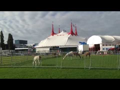 Circus KNIE montage Bern 2014 (6)
